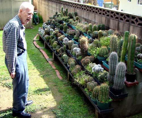 Sammy's cacti