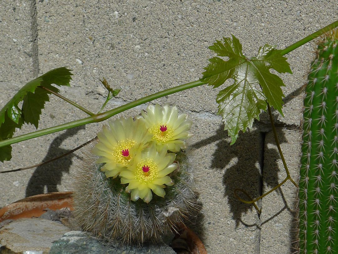 My Garden Photojournal
